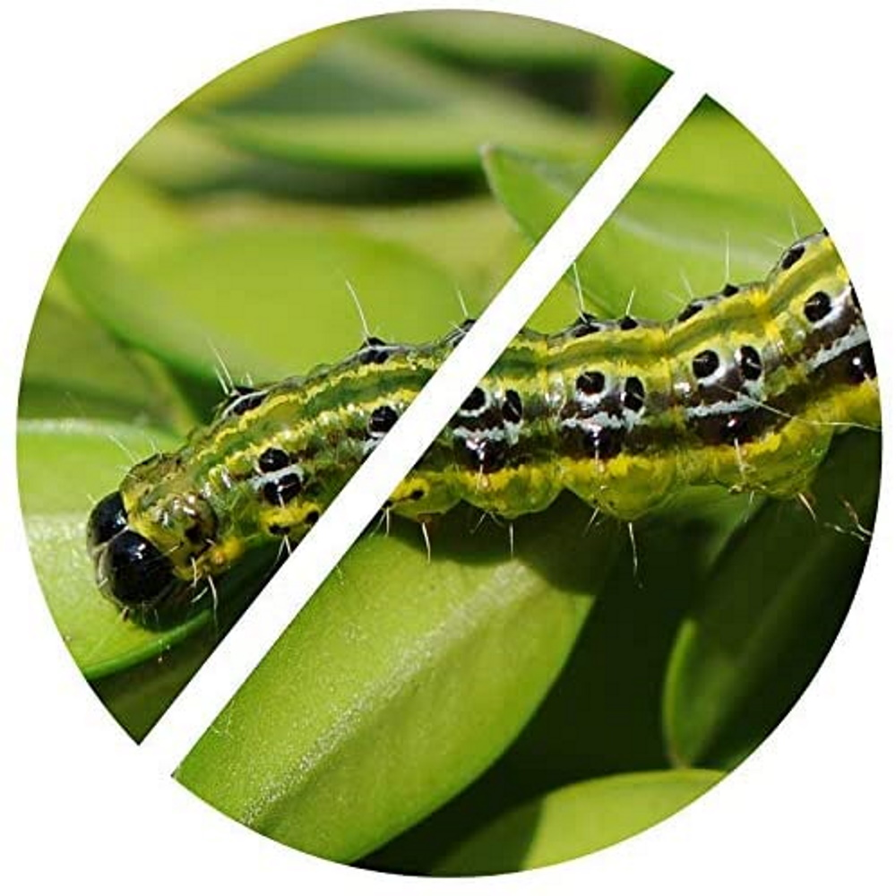 TOPBUXUS XenTari - Professional Dosage - Against Box Tree Moth Caterpillar - Biological - Safe for Bees and Birds - Also Effective Against Oak Processionary Caterpillar